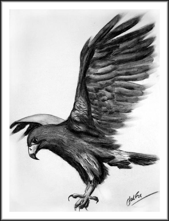 Eagle_FIN