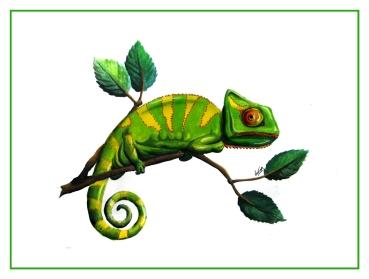 chameleon_FIN_WEB