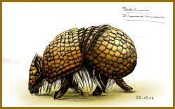 armadillo-colourfin_web
