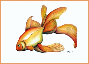 goldfish_fin_web