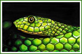 SnakeFIN_WEB2