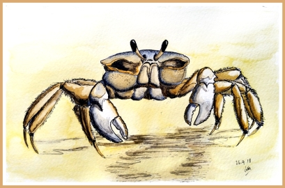 crab watercolour fin_WEB