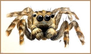 Spider_FIN