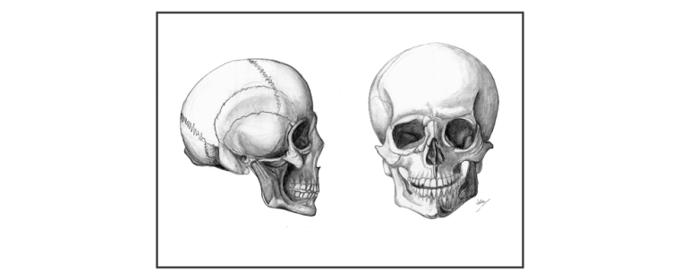 Skull Drawings_FIN_PREV