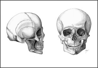 Skull Drawings_FIN_WEB