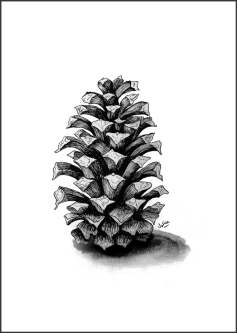 pinecone_FIN_WEB